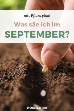 Aussaat Garden Projects, Home And Living, Plants, September, Gardening, Outdoor, Dessert, Inspiration, Farmhouse Garden