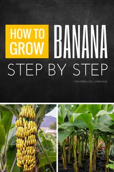 Garden Landscaping Planters All you need to do is carefully read these 10 tips on growing banana trees in pots and you will instantly become an expert!
