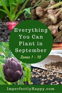 Everything You Can Plant in September for Zone 1 2 3 4 5 6 7 8 9 and 10 in your backyard vegetable garden and homestead. Vegetable Garden Planner, Backyard Vegetable Gardens, Veg Garden, Edible Garden, Garden Paths, Garden Types, Garden Table, Garden Bed, Easy Garden
