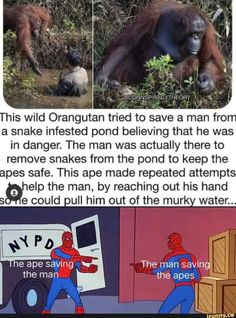 Really Funny Memes, Stupid Funny Memes, Funny Relatable Memes, Funny Stuff, Random Stuff, Funny Animal Memes, Funny Animals, Wholesome Memes, Faith In Humanity