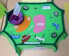 Célula Vegetal                                                                                                                                                     Más Plant Cell Project, 3d Cell, Science For Kids, Kids Education, Poker Table, School Projects, Plants, Knitting, Quotes