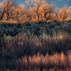 Soft, natural light on subtle colors of foliage in California's Owens Valley Landscape Photos, Landscape Art, Landscape Photography, Nature Photography, Beautiful Places, Beautiful Pictures, Shading Techniques, Modern Landscaping, Contemporary Landscape
