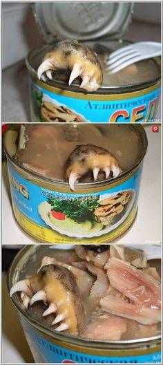 "Canned ""Atlantic Herring"" Food Fails, Pork, Meat, Chicken, Kale Stir Fry, Pork Chops, Cubs"