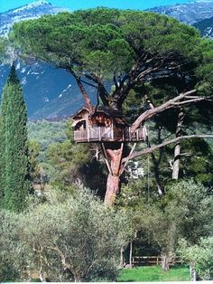 Eco Factor: Eco-friendly Tree House made entirely from wood. Living in a Tree House has been my biggest childhood fantasy. Nothing in the world can beat a peaceful and comfortable stay in the lap of nature. The shack perched is one name that. Beautiful Tree Houses, Cool Tree Houses, 10 Tree, In The Tree, Tree House Designs, Closer To Nature, Tree Tops, Play Houses, Architecture