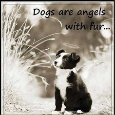 Dogs are angels with fur.they add another dimension and love to our lives. Reminds me of my sweet Border Collie, Friday. Dog Quotes, Animal Quotes, Dog Sayings, Lovers Quotes, Funny Quotes, Westies, Chihuahuas, Schnauzers, Beagles