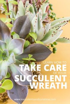 Make sure your succulent wreath stays looking great with these tips