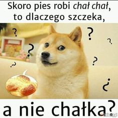 Też mnie to zastanawia. Wtf Funny, Funny Cute, Funny Jokes, Hilarious, Polish Memes, Weekend Humor, Best Memes Ever, Funny Mems, Man Humor
