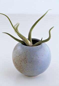 Ceramic Ball Vase by 100decors on Etsy