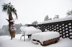 Palm tree and Snow Jeju 901 Hotel Jeju Island, South Korea Jeju City 1100ro 2977-8