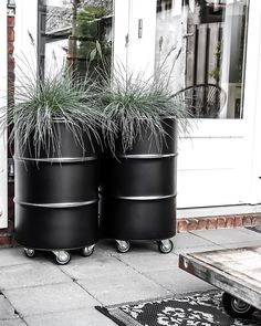 Oil drum planters to deck up your frontyard