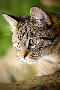 US is overrun with more than 50 million feral cats and cute cat pictures ^^ | Take a Quick Break