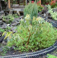 Quinn Mountain G-scale Garden railroad plants in Bonsai style