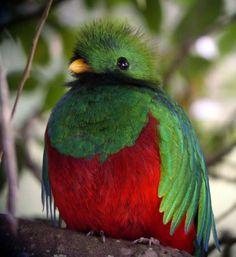 Quetzal: National bird ~ Guatemala