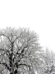 Neige sur Agen - Arbres en encre de Chine