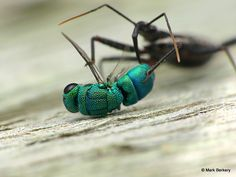 images of insects with descriptions | now a round of find insect by description prices amp description ...