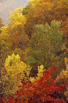 Hardwood Forest - West Virginia