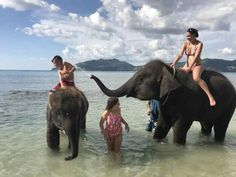 Yes, you can swim with elephants in Phuket, Thailand. Find out how much swimming with elephants in Phuket costs and their phone number. Phuket Thailand, Scuba Diving Thailand, Thailand Shopping, Thailand Destinations, Bangkok Travel, Thailand Travel, Bangkok Trip, Thailand Vacation, Riding Elephants In Thailand