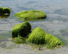rotsen bedekt met zeewier