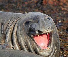 สัตว์30ตัวที่มีความสุขที่สุดในโลก เป็นเรื่องที่ยากที่คุณดูแล้วจะไม่หัวเราะ