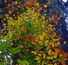 leaves autumn