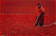 ... in Rajasthan.