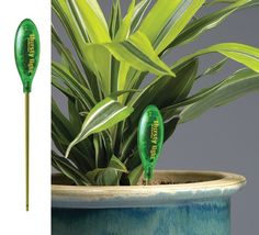 Flashes when plants need water.  I need to gift this baby to myself, because I dont have a very green thumb!