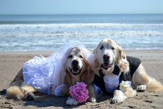 The Happy Couple .. Brie and Bentley posing for our Wedding and Happy Anniversary note cards