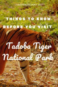 Tadoba Tiger Reserve is a great place to spot tigers, leopards, sambhars and gaurs. Find out all you need to know before you head out for a fun family summer vacation to Tadoba national park. Jungle Safari, Jungle Animals, Forest Department, Tiger Love, Gentle Parenting, Parenting Tips, Chores For Kids, Kids Behavior, Parc National