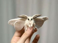Venezuelan Poodle Moth  Fungi & Moths  Pinterest  Moth Poodle Endearing Small Moths In Bathroom Decorating Design