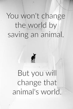 Adopt a dog, and you will change his world. More