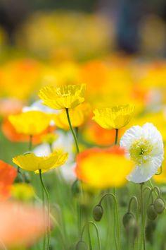 Flickr. Hitohira