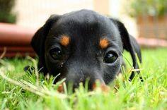 Hello cutie!!!!