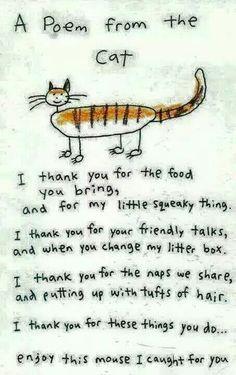 Crazy Cat Lady, Crazy Cats, Cat Poems, Funny Poems, Mothers Day Poems, Happy Mothers, Happy Mom, All About Cats, Cat Quotes