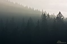 Javorina misty forest : Photos, Diagrams & Topos : SummitPost Misty Forest, River, Mountains, Forests, Macrame, Nature, Landscapes, Outdoor, Wallpapers