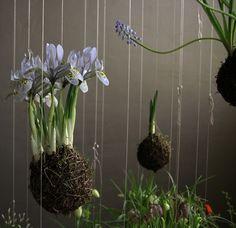 Presente sus plantas según la nueva tendencia Kokedama y sorpende a sus clientes con esta técnica popular de Japón. Kokedama es un estilo de Bonsai Japonés y es el término japonés para bolas de musgo.