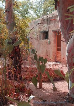 Old Adobe House 6, in Tucson, Arizona, has desert landscaping, with various cacti in the front yard.  #kulish, #tamara, #adobe, #sidewalk, #santafe, #historic, #shadow, #FAA, #fineartamerica, #reproduction, #print, #framing