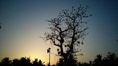 Wedding decoration # tree # sunset