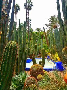 fuori dalla medina,nella zona nuova di Marrakech ci sono i Jardin Majorelle. un tripudio di cactus,palme e piante da tutto il mondo ,in uno spazio super colorato di giallo e blu Klein. Uno dei giardini piu'particolari che abbia mai visto.... Le Foto di KatyB.