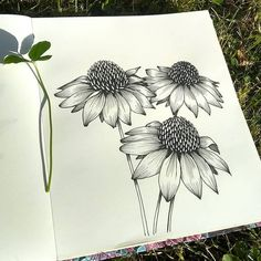 Art Drawings Sketches Simple, Pencil Sketch Drawing, Pencil Art Drawings, Easy Drawings, Art Floral, Floral Drawing, Pen Art, Botanical Art, Art Sketchbook