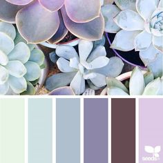 today's inspiration image for { succulent hues } is by @daphnerosaflowers ... thank you, Kate, for sharing your wonderful photo in #SeedsColor ! ... & wishing a very *happy 12th birthday* to my daughter @the_rubyjoy ~ this palette reminds me or you, Ruby Joy ... unique, vibrant, radiating beauty, & lights a smile within all us ... to my pastel loving, sorbet color connoisseur ~ wishing you a best-birthday-yet!