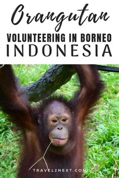 Indonesia: I recently travelled to Indonesian Borneo for a personal adventure working with orangutans. Our accommodation whilst volunteering at the Samboja Orangutan Sanctuary was Samboja Lestari Ecolodge. Borneo Travel, Bali Travel, Japan Travel, Travel Guides, Travel Tips, Travel Info, Time Travel, Travel Destinations, Lombok