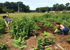 Garden unites people from diverse backgrounds - AgriNews