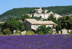 lavender field surrounding village in Provence
