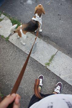 Wie bringt man einem Hund die Leinenführigkeit bei ? Antworten und Tipps in unserem Hundeblog unter http://www.diehundewiese.de/hundeerziehung/dem-hund-die-leinenfuhrigkeit-beibringen/