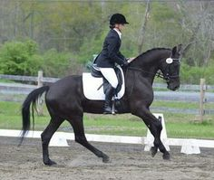 AnnaLena | Dressage Horses For Sale | DressageMarket.com
