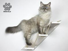THE LADDER Furniture for cats