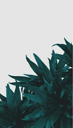 End Up Here Photographic Print by Hanna Kastl-Lungberg - Phone Wallpaper Tumblr Backgrounds, Tumblr Wallpaper, Phone Backgrounds, Wallpaper Backgrounds, Iphone Wallpapers, Iphone Wallpaper Plants, Art Mural, Wall Art, Poster Online