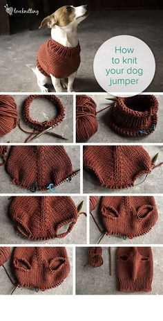 How to knit your own dog jumper. FREE tutorial + knitting pattern. Available at LoveKnitting. I might have to knit a version of this for our cats. Just because.