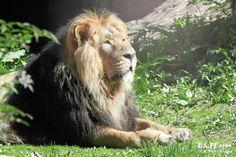 Один из лучших зоопарков Европы - Коркеасаари (Хельсинки)