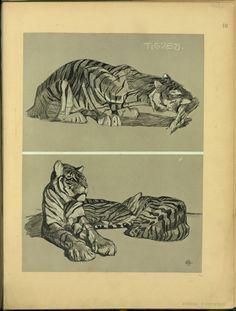 Tigres - ID: 102348 - NYPL Digital Gallery